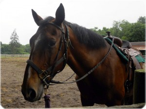 Caring Horse Cremation in NC