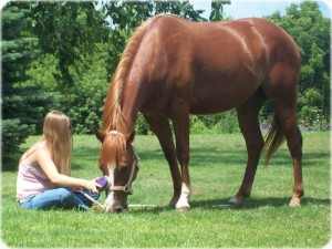 NC Horse Cremation Services